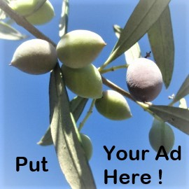 Closeup photo of olives starting to ripen on a tree, with blue sky in the background and the words