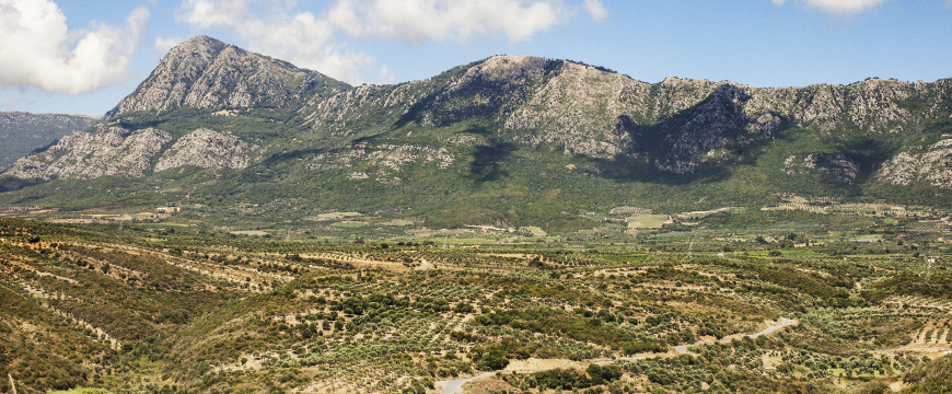 olive groves in a valley, leading up to hills or mountains that are rocky and steep on top
