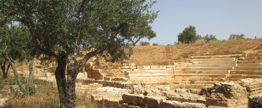 An olive tree next to the back of the amphitheater at Ancient Aptera in Crete