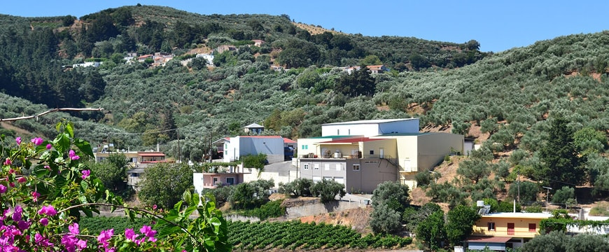 Anoskeli olive oil factory and winery buildings in a valley among olive trees and vineyards