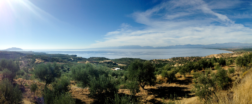 landscape in Laconia with olive groves, sea, and blue sky
