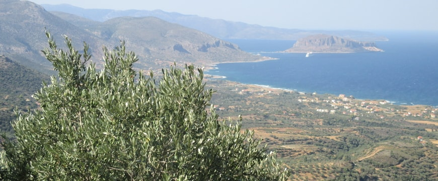 Olive trees in a valley, the sea, island of Monemvasia