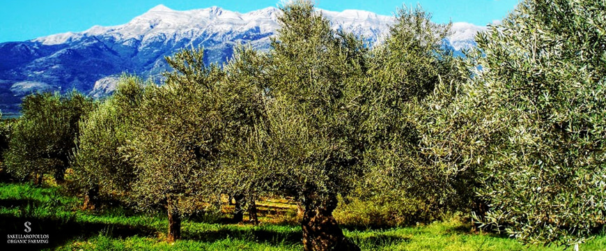 olive trees with mountains in the background, and the Sakellaropoulos Organic Farming logo in the lower left corner