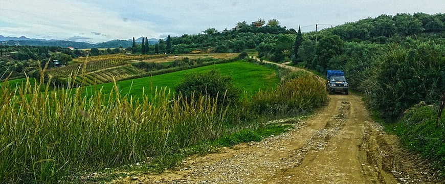 Countryside with dirt road and PJ Kabos olive groves