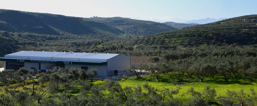 Terra Creta's olive mill building surrounded by olive groves in Crete