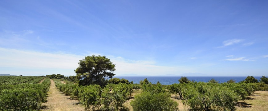 Yanni's olive groves, sea, and sky