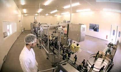Man in white clothing with hair covered observing automated olive oil bottling process