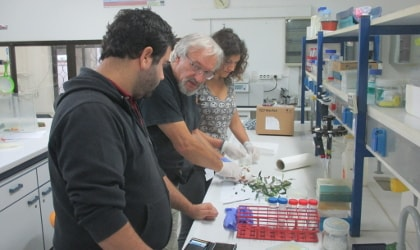 Dr. Saverio Pandolfi (center) in the lab with researchers at the Mediterranean Agronomic Institute of Chania