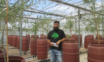 Aristotelis Azariadis with small olive trees in the greenhouse
