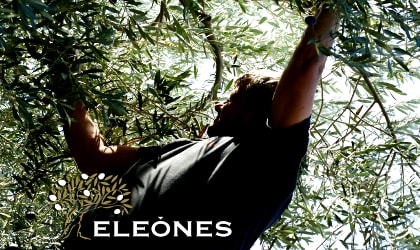 Eleones olive picker in a tree