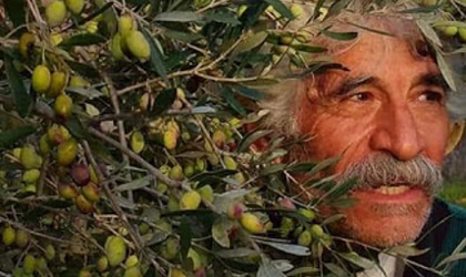A closeup of the face of Grigoris Kokolakis, peaking through branches full of olives