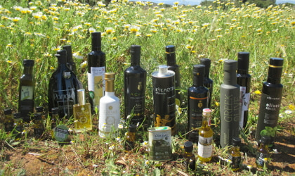 Bottles of Greek olive oil in front of wild daisies