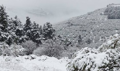snowy trees and hills in Crete