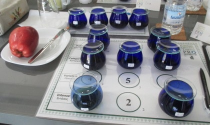 11 blue olive oil tasting glasses, an apple on a plate at the left, bottle of water back right