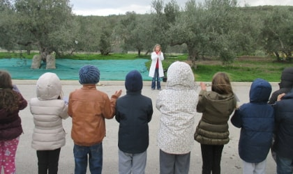 children standing in a line across from an olive grove, facing a teacher