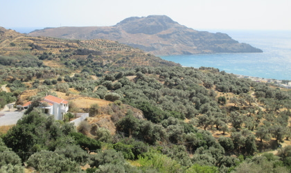 olive groves above Plakias, with hills, sea, and sky