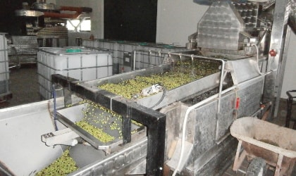 Washing olives at a mechanized olive mill in Astrikas village, Crete