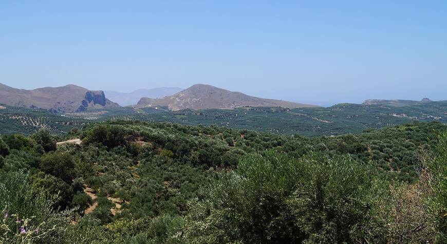 hills and valleys full of olive groves