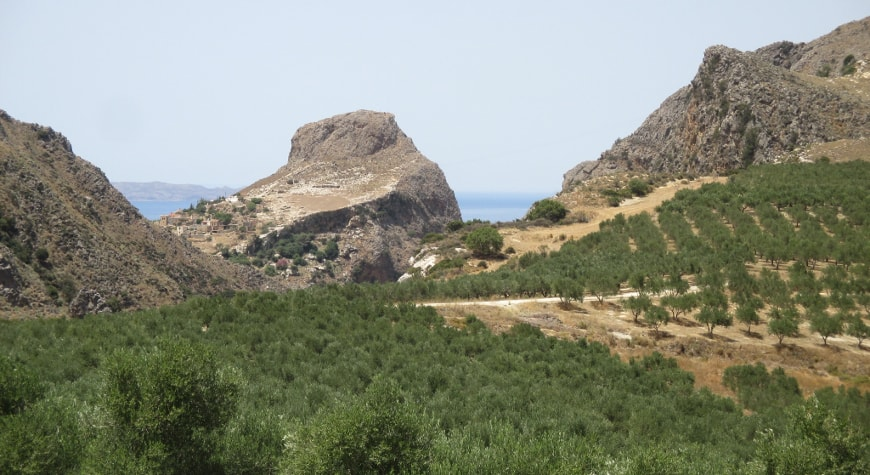 Biolea's olive groves leading up to dramatic view of hills, cliffs, sea, and sky