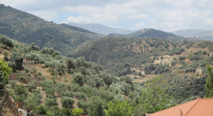Hills full of olive groves around the Botanical Park with a bit of its orange tiled restaurant roof in lower right corner