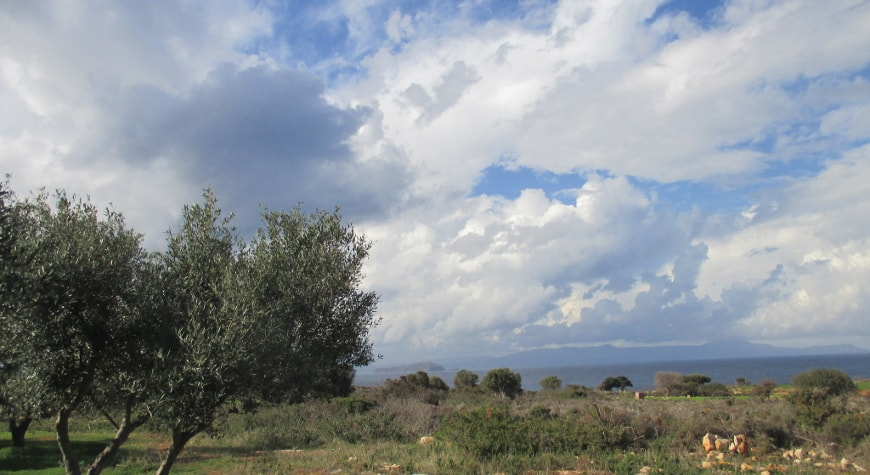 olive tree, December cloudscape