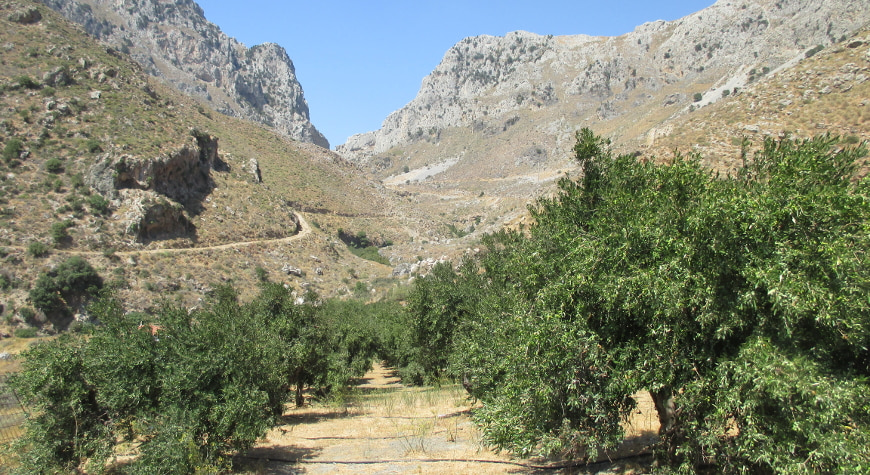 olive groves in front of rocky hills