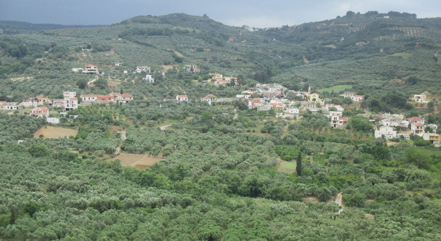 Olive groves in the valley below Vouves, inland from Kolymvari