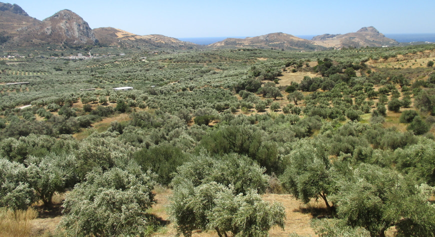 olive groves, hills, sea, and sky in southern Crete