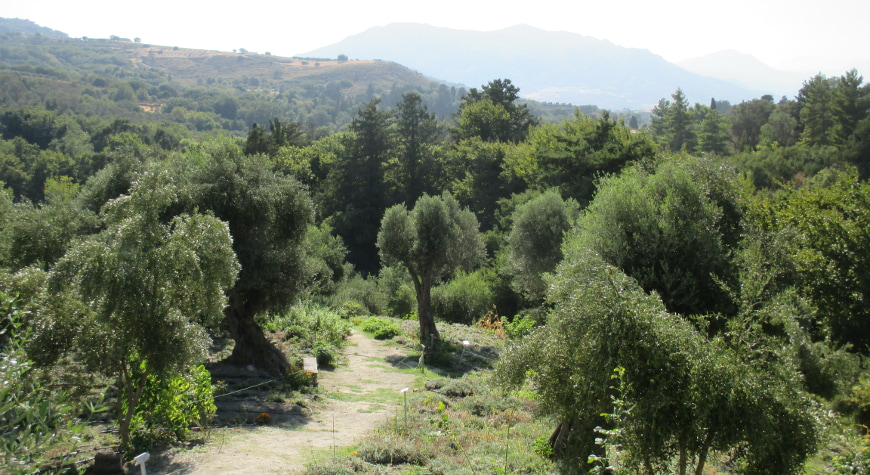 olive and other trees in Maravel gardens in Spili